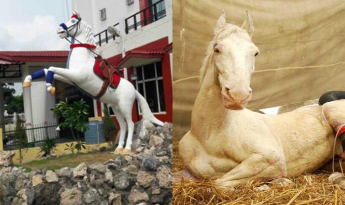 harish-rawat-uttarakhand-shaktiman-horse-niharonline